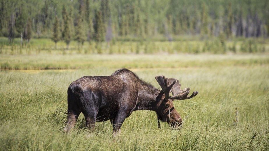 CANADA: WILDLIFE ODYSSEY